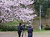 Sakura12
