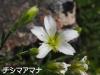 Amana_20200719074601