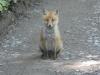 Fox_20200528064601