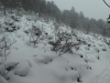 Snow1_20201029061601