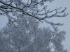 Snow2_20200416053901