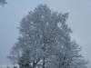 Snow3_20200416053901