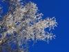 Tree3_20191016062501